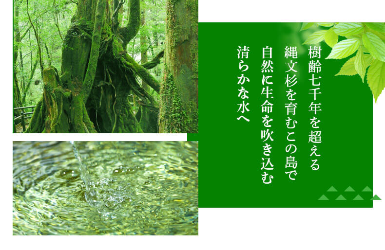 樹齢7000年を超える縄文杉を育むこの島で自然に生命を吹き込む清らかな水へ